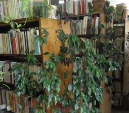 Общинска библиотека в Горна Оряховица за пореден път спечели проект за закупуване на нови книги